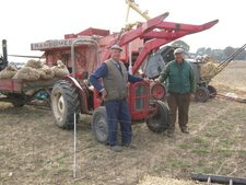 MF-35-on-corn-carting-duty-at-Skeyton-Trosh.jpg